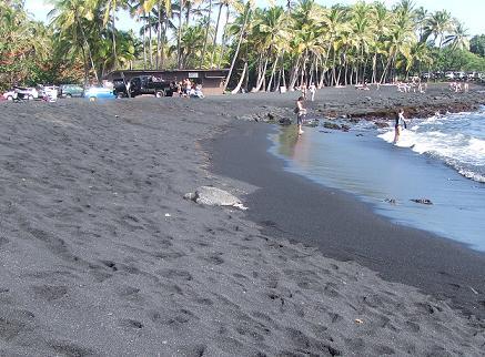 ブラックサンドビーチの亀さん