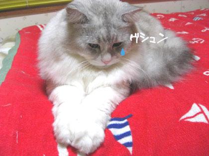がんばれダイズ3