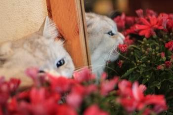 花を食べる猫2