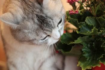 花を食べる猫1