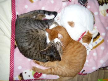 猫団子(ムサシ、こいと、こうへい)