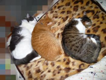 猫団子三兄弟