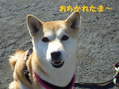 おちかれ1219