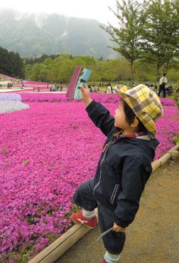 110505芝桜