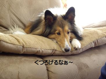 obihiro6