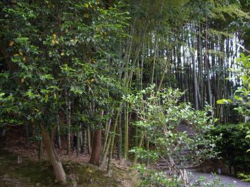 京都014