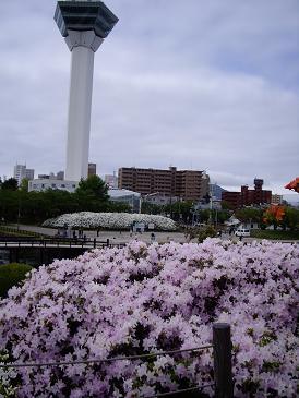 函館へ10