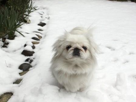 momo_snow1.jpg