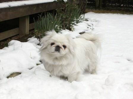 momo_snow2.jpg
