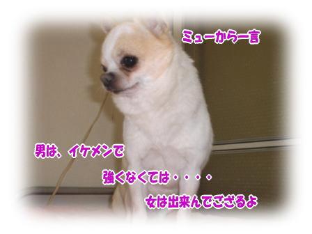CIMG0696.jpg