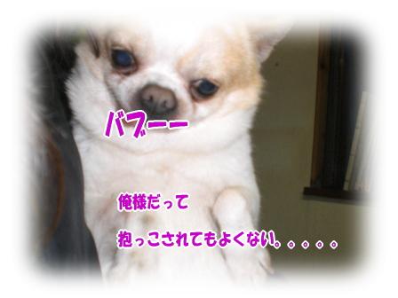 CIMG0879.jpg