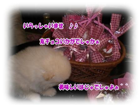 CIMG0961.jpg