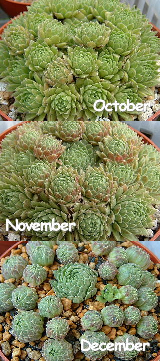 10~12月