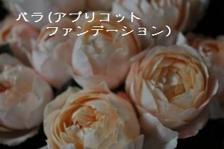 DSC_0001fl.jpg