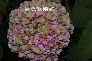 DSC_0002fl.jpg