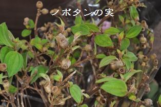 DSC_0005fl.jpg