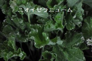 DSC_0007fl.jpg