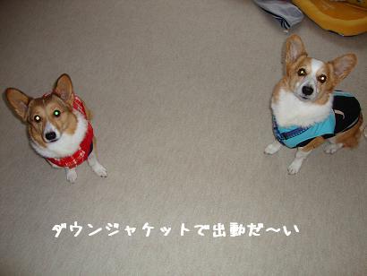 ダウンジャケット紋&杏