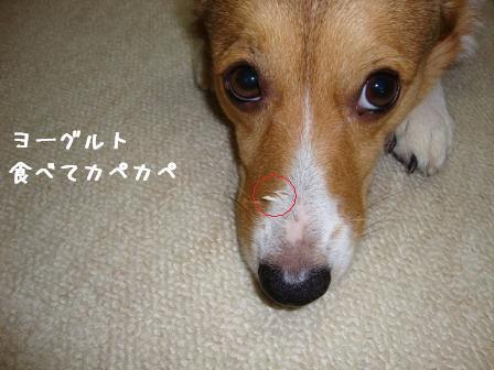 カペカペ鼻 杏