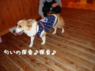 12.19ワンダフル 紋兄2