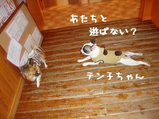 12.19ワンダフル てん子&ショコラ