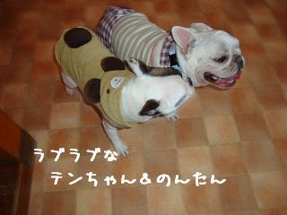 12.19ワンダフル のんたん&てんちゃん