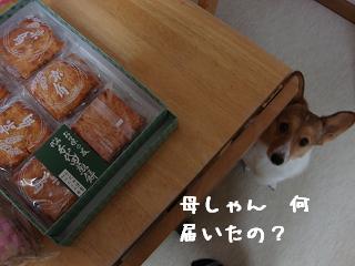 おせんべいと杏
