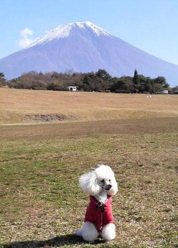 富士山と一緒に