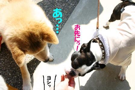 IMG_オヤツ作戦3