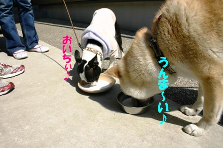IMG_オヤツ作戦5
