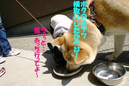 IMG_オヤツ作戦7