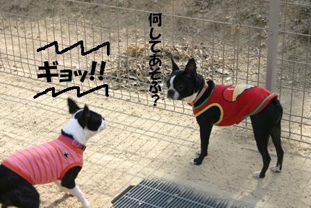 IMG_さくらちゃんと3