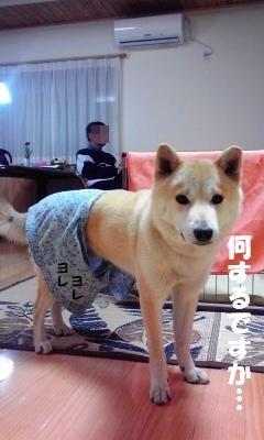 オパンツ犬