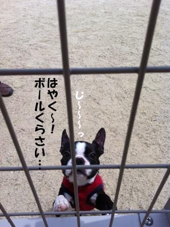 もみじちゃん3