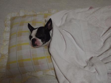 布団で眠るコ