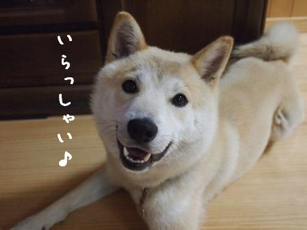 fukumonet1.jpg
