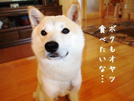 fukumonte2.jpg
