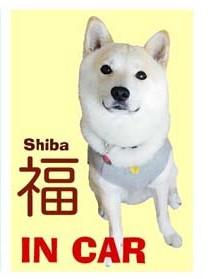 shiba_huku_incar2.jpg