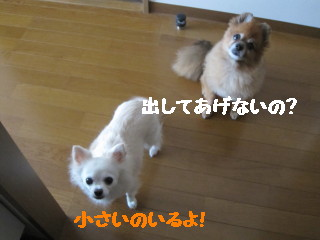 IMG_2080.jpg