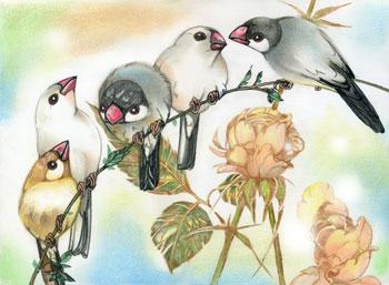 薔薇と文鳥WEB