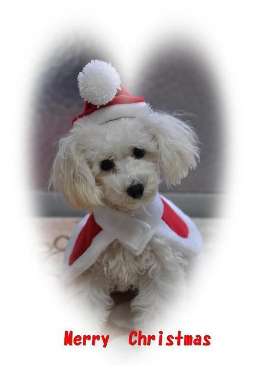 Merry Chstmas