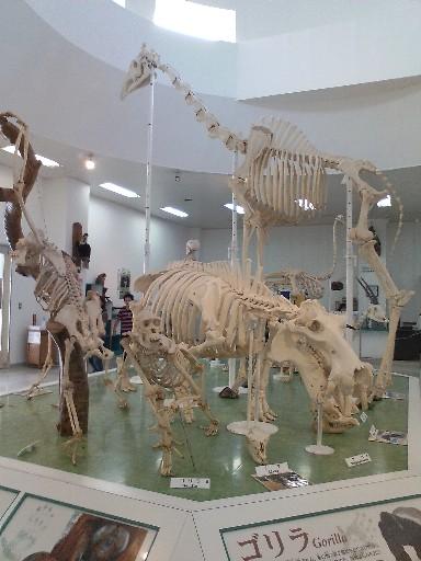 福岡市動物園・動物科学館の骨格標本