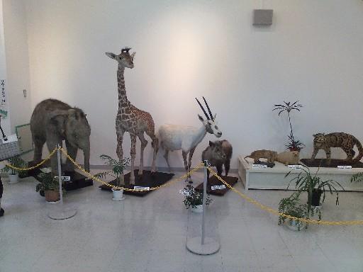 福岡市動物園・動物科学館の剥製