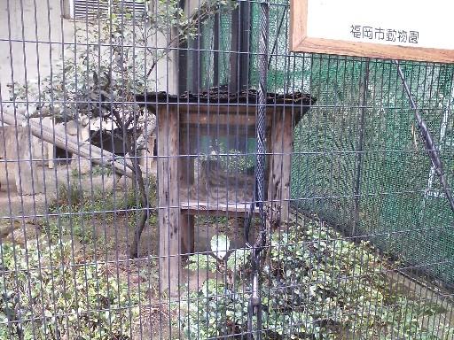 福岡市動物園・イリオモテヤマネコ