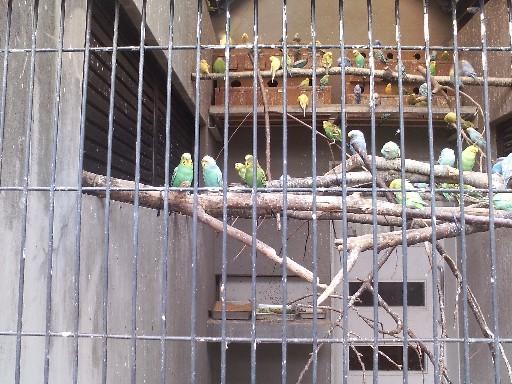 福岡市動物園・オカメインコとセキセイインコ