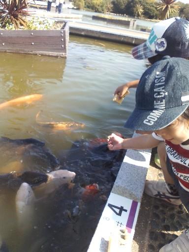 海中公園・鯉