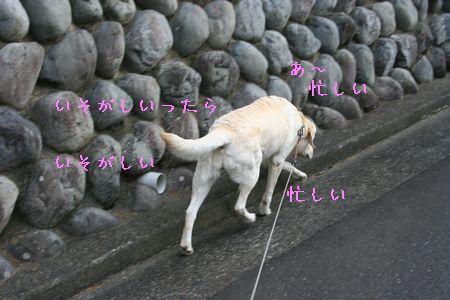 画像 459