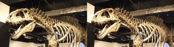 アクロカントサウルス①(交差法)