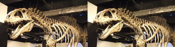 アクロカントサウルス①(平行法)