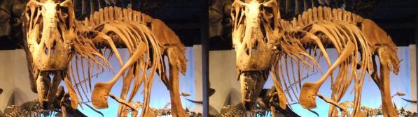 ゴルゴサウルス(平行法)